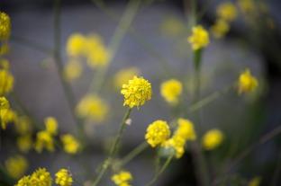 yellow flowers dainty wildflowers